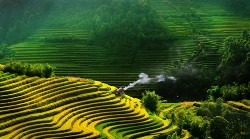 Vẻ đẹp ngút ngàn của các cánh đồng lúa trên toàn thế giới - anh 6