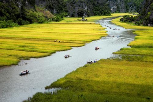 Vẻ đẹp ngút ngàn của các cánh đồng lúa trên toàn thế giới - anh 8