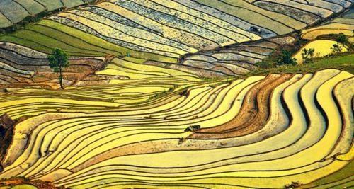Vẻ đẹp ngút ngàn của các cánh đồng lúa trên toàn thế giới - anh 23