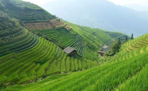 Vẻ đẹp ngút ngàn của các cánh đồng lúa trên toàn thế giới - anh 28