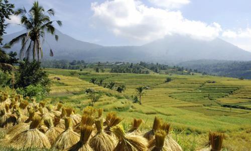 Vẻ đẹp ngút ngàn của các cánh đồng lúa trên toàn thế giới - anh 12