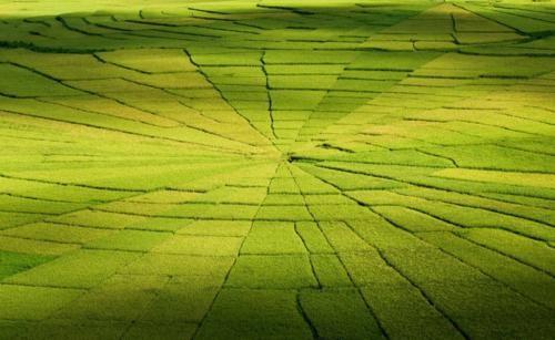 Vẻ đẹp ngút ngàn của các cánh đồng lúa trên toàn thế giới - anh 13