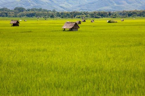 Vẻ đẹp ngút ngàn của các cánh đồng lúa trên toàn thế giới - anh 17