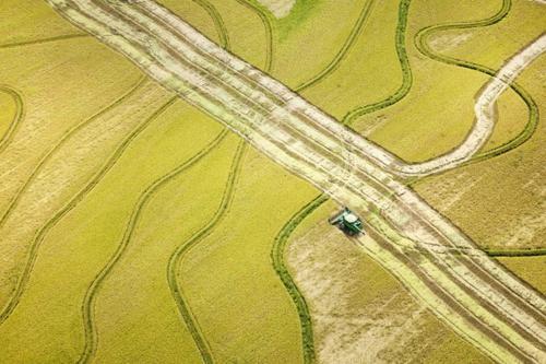 Vẻ đẹp ngút ngàn của các cánh đồng lúa trên toàn thế giới - anh 26