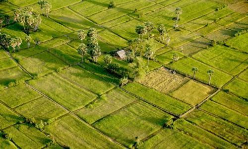 Vẻ đẹp ngút ngàn của các cánh đồng lúa trên toàn thế giới - anh 15