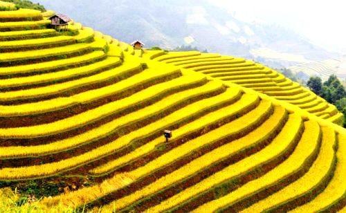 Vẻ đẹp ngút ngàn của các cánh đồng lúa trên toàn thế giới - anh 1