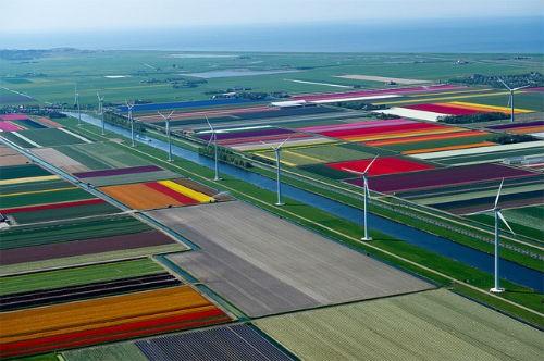 Ngắm thiên đường hoa Tulip độ xuân thì ở xứ sở Hà Lan - anh 19