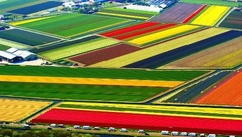 Ngắm thiên đường hoa Tulip độ xuân thì ở xứ sở Hà Lan - anh 14