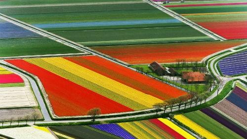 Ngắm thiên đường hoa Tulip độ xuân thì ở xứ sở Hà Lan - anh 15