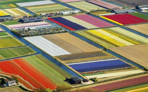 Ngắm thiên đường hoa Tulip độ xuân thì ở xứ sở Hà Lan - anh 16