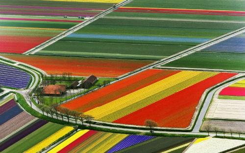 Ngắm thiên đường hoa Tulip độ xuân thì ở xứ sở Hà Lan - anh 17