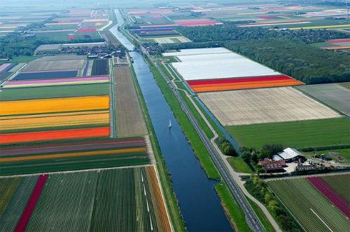 Ngắm thiên đường hoa Tulip độ xuân thì ở xứ sở Hà Lan - anh 18