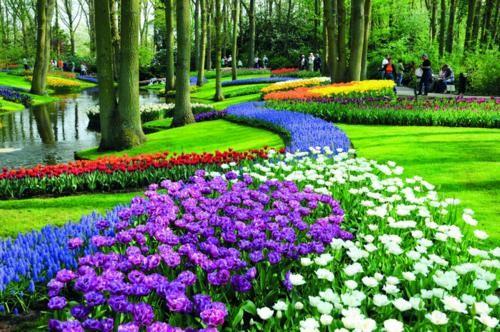 Ngắm thiên đường hoa Tulip độ xuân thì ở xứ sở Hà Lan - anh 23