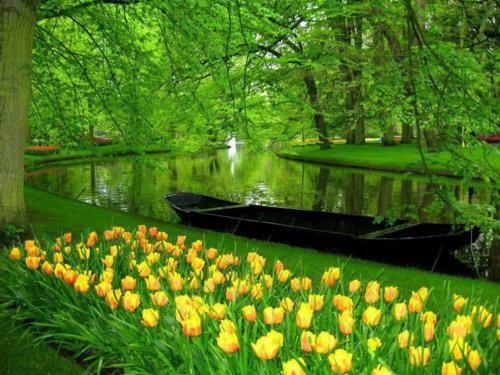 Ngắm thiên đường hoa Tulip độ xuân thì ở xứ sở Hà Lan - anh 24