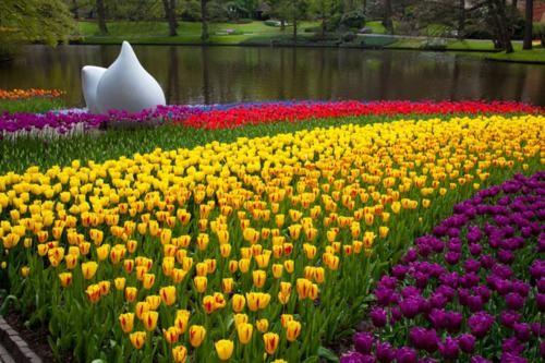 Ngắm thiên đường hoa Tulip độ xuân thì ở xứ sở Hà Lan - anh 25