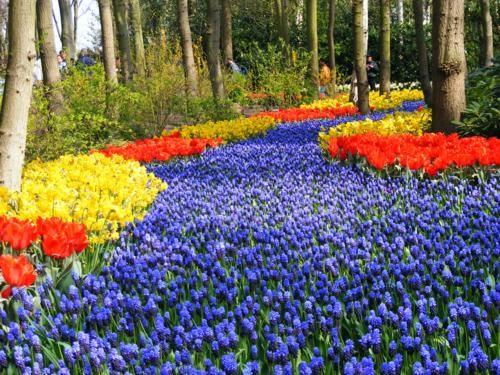 Ngắm thiên đường hoa Tulip độ xuân thì ở xứ sở Hà Lan - anh 27