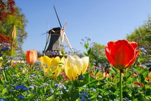 Ngắm thiên đường hoa Tulip độ xuân thì ở xứ sở Hà Lan - anh 28
