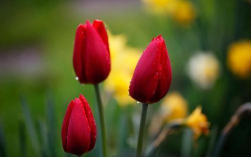 Ngắm thiên đường hoa Tulip độ xuân thì ở xứ sở Hà Lan - anh 8