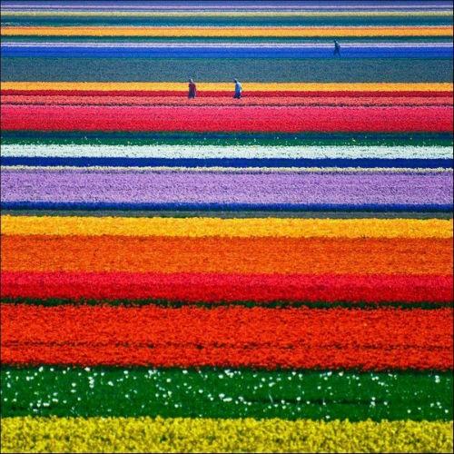 Ngắm thiên đường hoa Tulip độ xuân thì ở xứ sở Hà Lan - anh 21