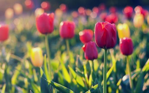 Ngắm thiên đường hoa Tulip độ xuân thì ở xứ sở Hà Lan - anh 4