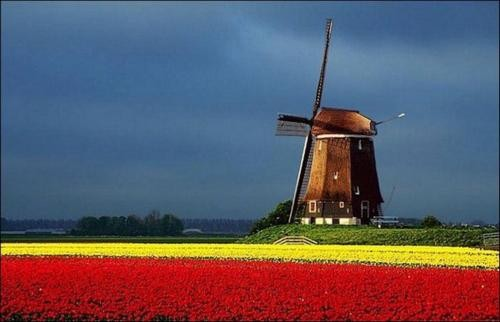 Ngắm thiên đường hoa Tulip độ xuân thì ở xứ sở Hà Lan - anh 11