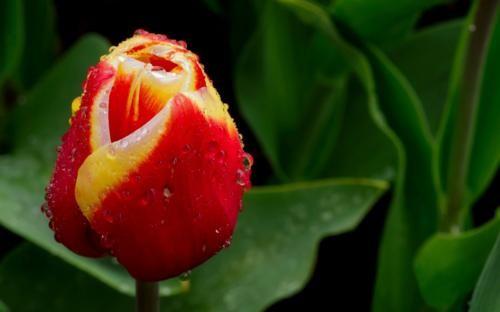 Ngắm thiên đường hoa Tulip độ xuân thì ở xứ sở Hà Lan - anh 13