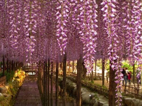 Ngắm ngàn hoa rực nở trong tiết xuân xứ Phù Tang - anh 12