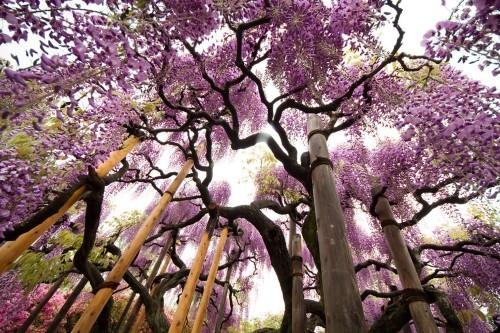 Ngắm ngàn hoa rực nở trong tiết xuân xứ Phù Tang - anh 11