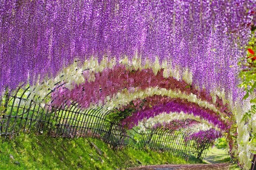 Ngắm ngàn hoa rực nở trong tiết xuân xứ Phù Tang - anh 5