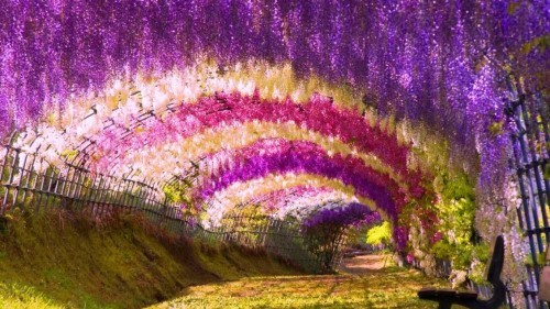 Ngắm ngàn hoa rực nở trong tiết xuân xứ Phù Tang - anh 4