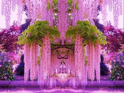 Ngắm ngàn hoa rực nở trong tiết xuân xứ Phù Tang - anh 15