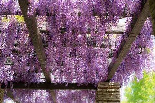 Ngắm ngàn hoa rực nở trong tiết xuân xứ Phù Tang - anh 21
