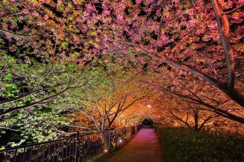 Ngắm ngàn hoa rực nở trong tiết xuân xứ Phù Tang - anh 18
