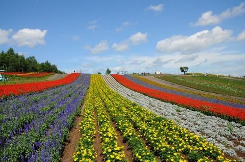 Ngắm ngàn hoa rực nở trong tiết xuân xứ Phù Tang - anh 19