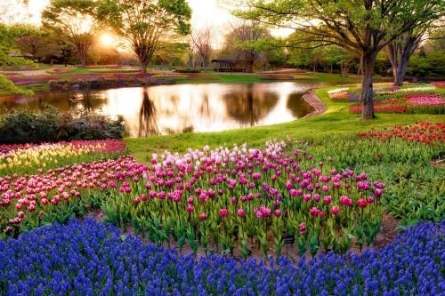 Ngắm ngàn hoa rực nở trong tiết xuân xứ Phù Tang - anh 20