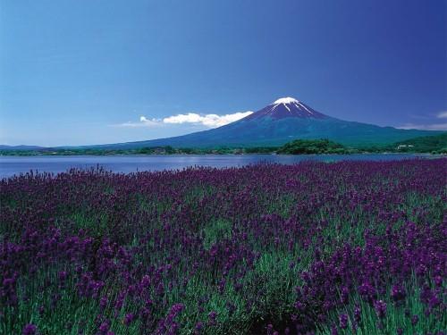 Ngắm ngàn hoa rực nở trong tiết xuân xứ Phù Tang - anh 23