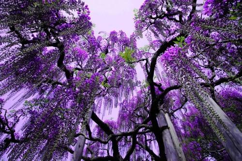 Ngắm ngàn hoa rực nở trong tiết xuân xứ Phù Tang - anh 24
