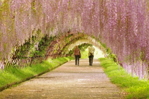 Ngắm ngàn hoa rực nở trong tiết xuân xứ Phù Tang - anh 26