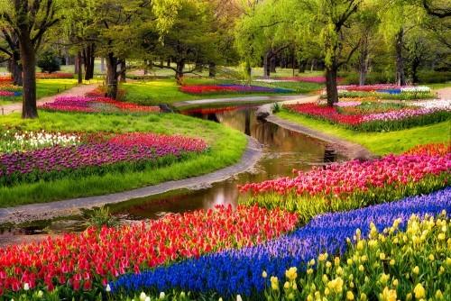 Ngắm ngàn hoa rực nở trong tiết xuân xứ Phù Tang - anh 27