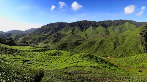 Lạc bước tại những đồi chè xanh mướt, đẹp nhất thế giới - anh 3