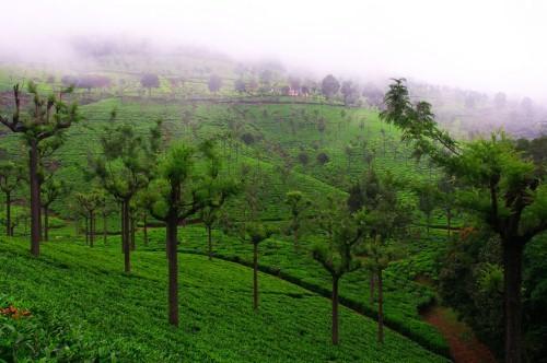 Lạc bước tại những đồi chè xanh mướt, đẹp nhất thế giới - anh 18
