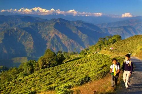 Lạc bước tại những đồi chè xanh mướt, đẹp nhất thế giới - anh 19