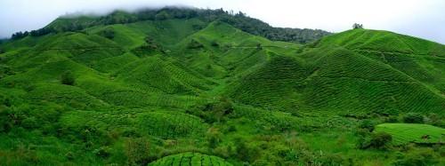 Lạc bước tại những đồi chè xanh mướt, đẹp nhất thế giới - anh 6