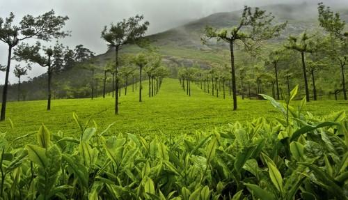 Lạc bước tại những đồi chè xanh mướt, đẹp nhất thế giới - anh 22