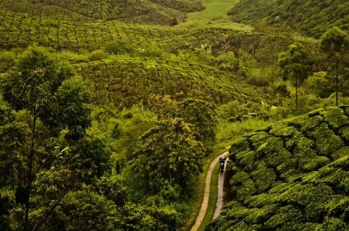 Lạc bước tại những đồi chè xanh mướt, đẹp nhất thế giới - anh 7