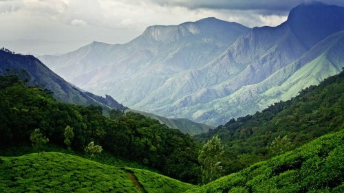 Lạc bước tại những đồi chè xanh mướt, đẹp nhất thế giới - anh 26