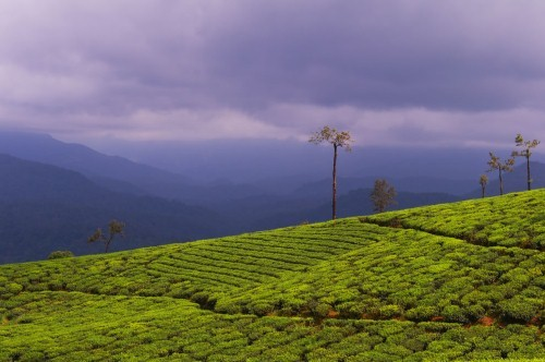 Lạc bước tại những đồi chè xanh mướt, đẹp nhất thế giới - anh 27