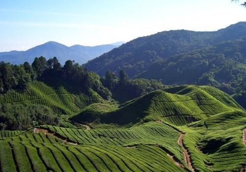 Lạc bước tại những đồi chè xanh mướt, đẹp nhất thế giới - anh 28
