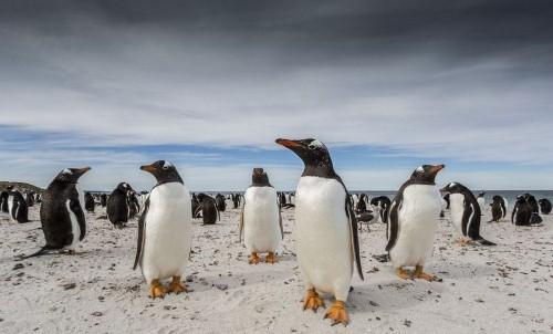 6 bức ảnh lọt chung kết của National Geographic Photo Contest 2015 - anh 6