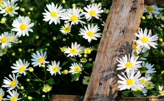 Hoa xuống phố, những chiều cuối năm - anh 1